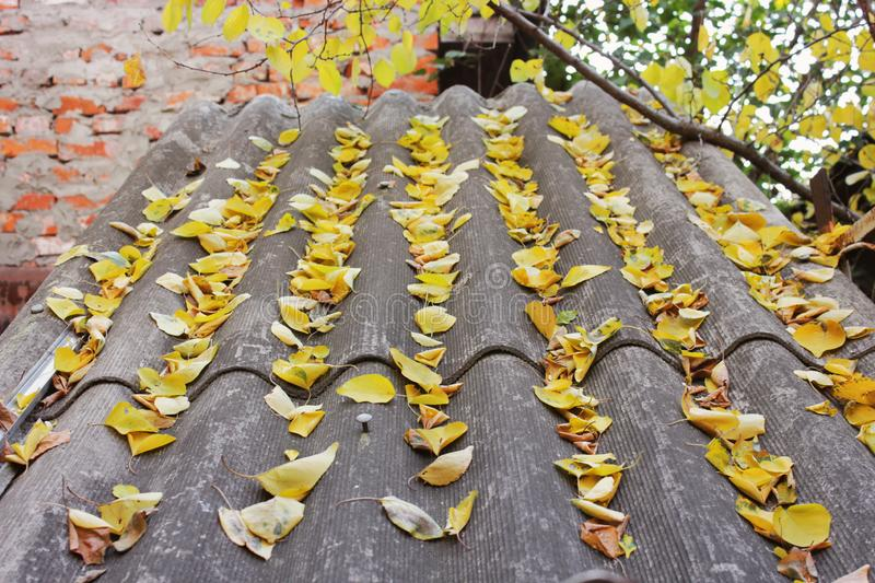 Leaves on the roof. Autumn royalty free stock photos