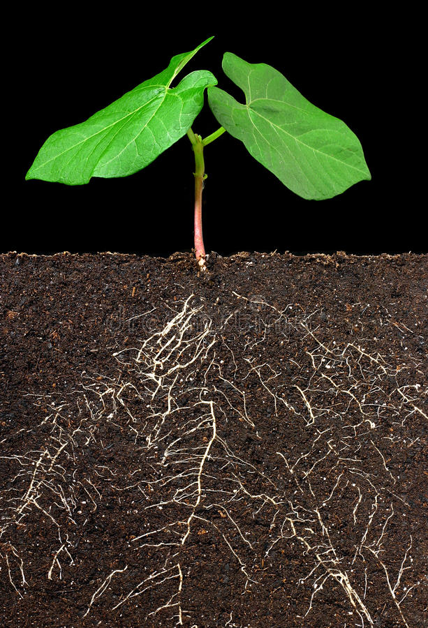 Leaves, roots and dirt stock image