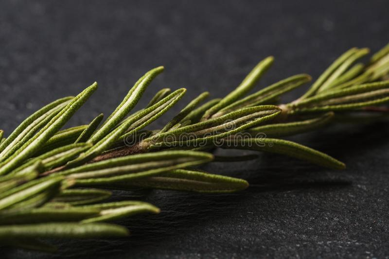 Leaves of rosemary on a dark background for cooking. Rosemary herbs close up stock images