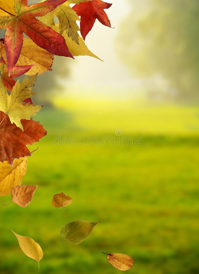 Leaves scenery royalty free stock images