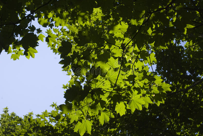 Download Leaves through the sky stock photo. Image of coloured - 10227664