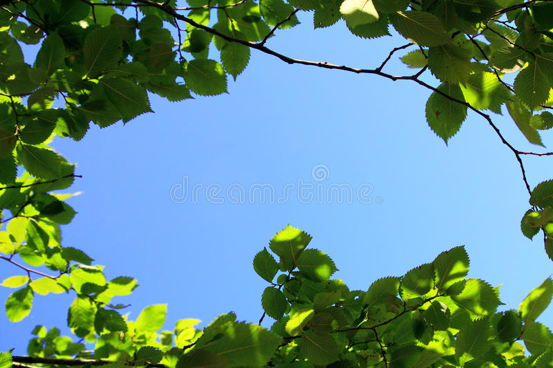 Leaves on sky background. Leaves against the blue sky stock image