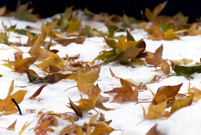 Leaves on snow stock photos