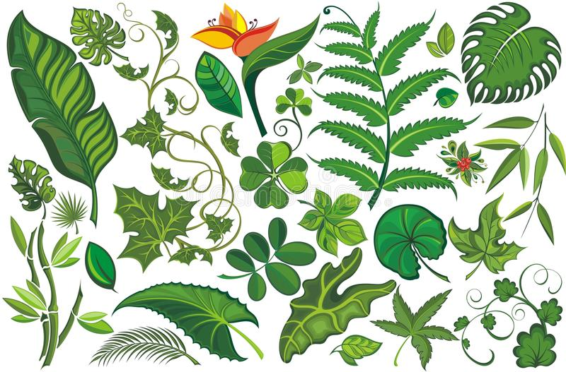 leaves ställde in tropiskt royaltyfri illustrationer