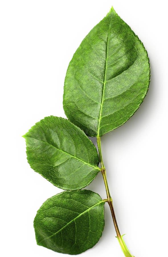 leaves steg royaltyfria foton