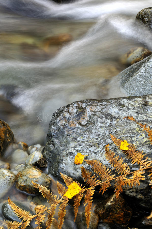 Download Leaves In A Stream Stock Images - Image: 22020544
