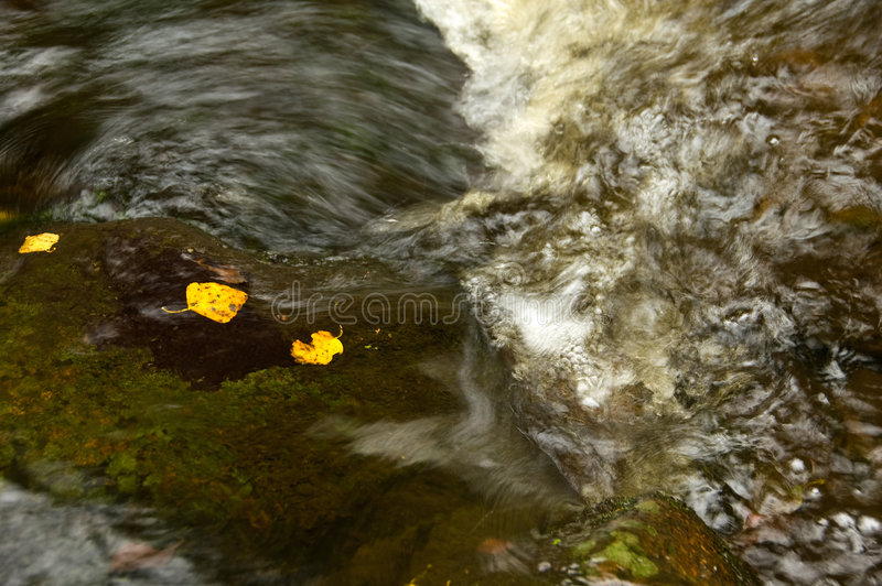 Leaves in stream 8170 stock photo