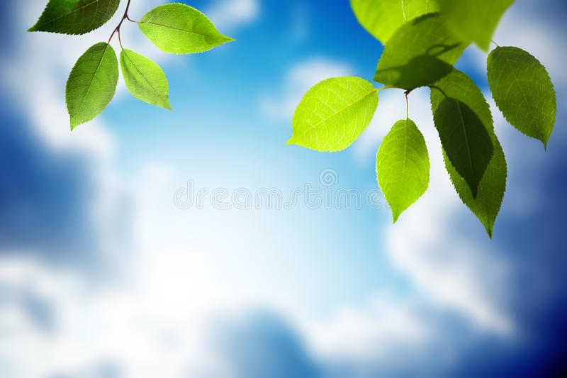 Download Leaves and sunny sky stock image. Image of nature, freshness - 21714947