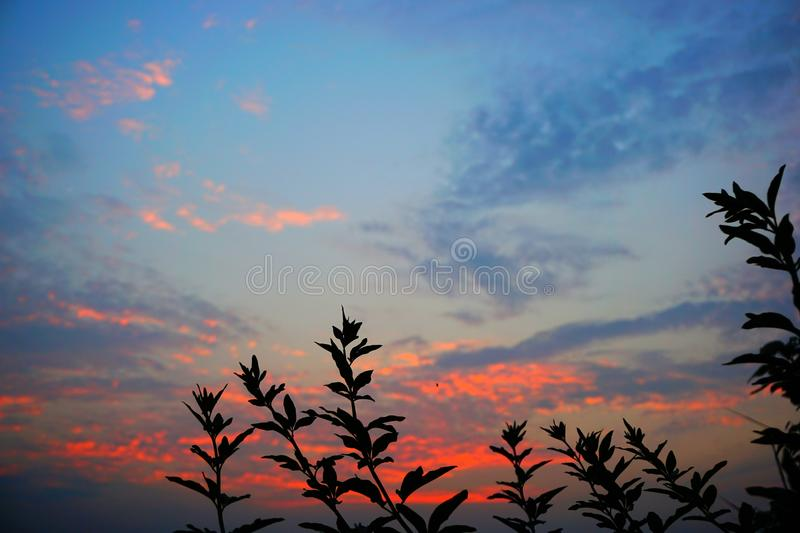 Leaves at sunset colorful background stock photos