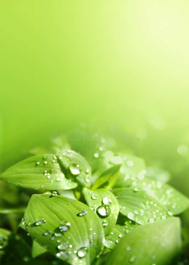 Leaves in a sunshower royalty free stock photos