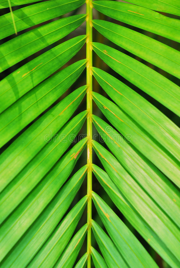 Leaves In Symmetry stock images