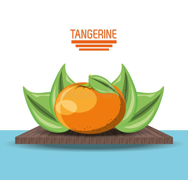 Citric fruits design. Leaves and tangerine fruit icon over white background vector illustration royalty free illustration