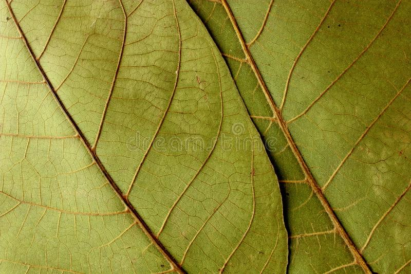 Leaves texture stock photos