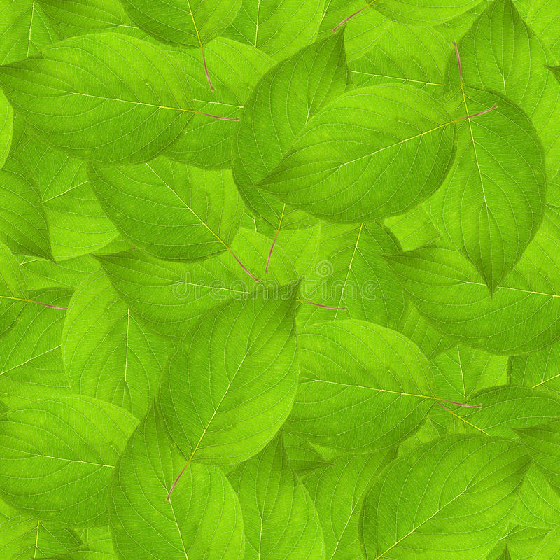 Download Leaves texture stock photo. Image of background, leaves - 20474954