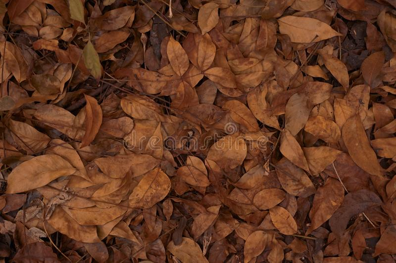 Leaves texture background stock photography