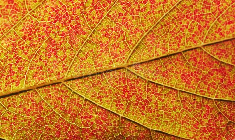 Leaves texture stock images