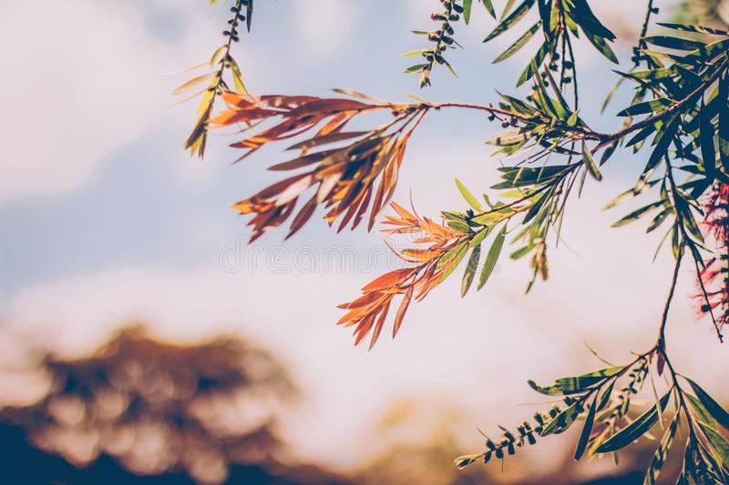 Leaves on tree royalty free stock image