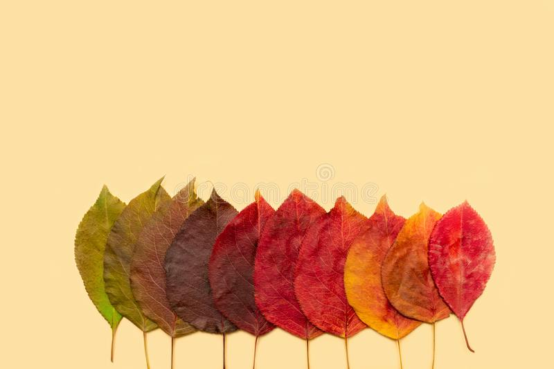Leaves of trees - gradients from green to yellow on a light orange background. Natural color gradation from summer to autumn. Leaves of trees gradients from royalty free stock photo