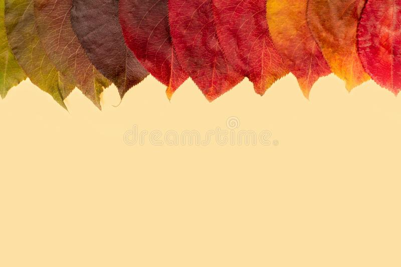 Fallen leaves of trees are located at the top. Gradients from green to yellow on a light background. Natural color gradation. Leaves of trees are located at the stock image