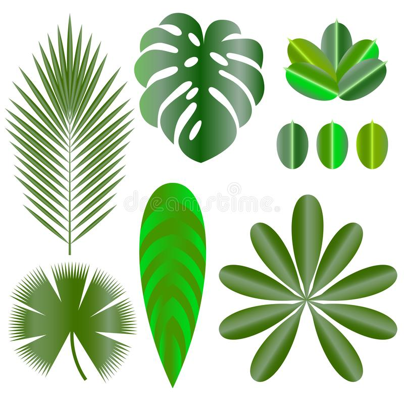 Leaves of tropical plants. Isolated items. Monstera, ficus, palm tree, Schefflera. Leaves of tropical plants. Isolated items. Monstera, ficus, palm tree stock illustration