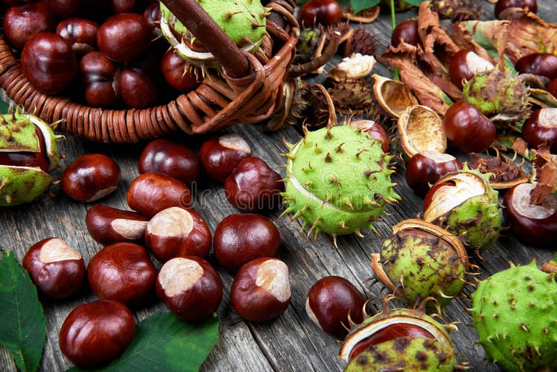 Leaves and fruits of chestnut on wooden table royalty free stock photo