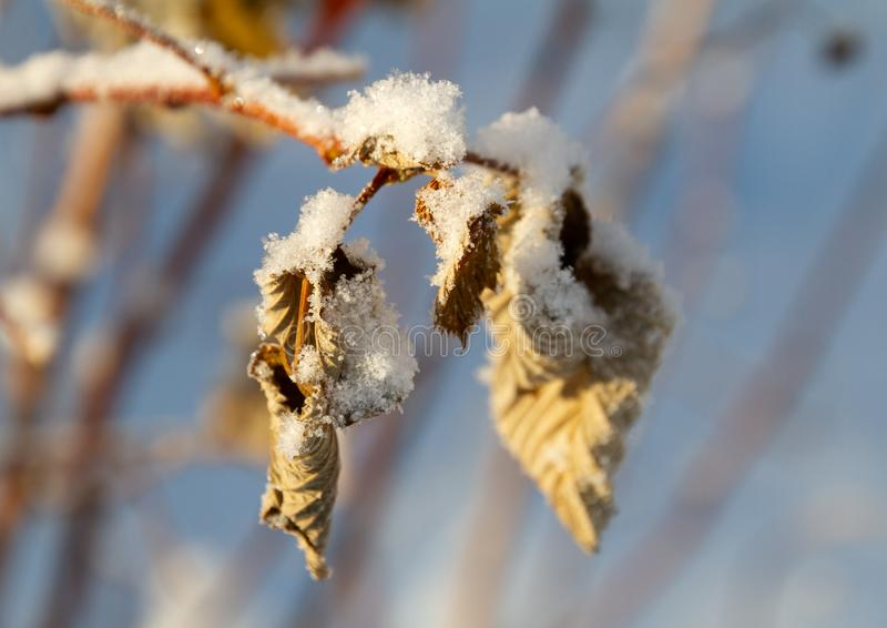 Leaves under snow in the winter. royalty free stock images