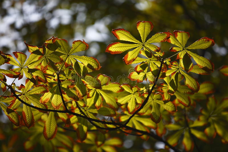 Leaves under sunshine. Some leaves are under sunshine in a late summer day stock photos
