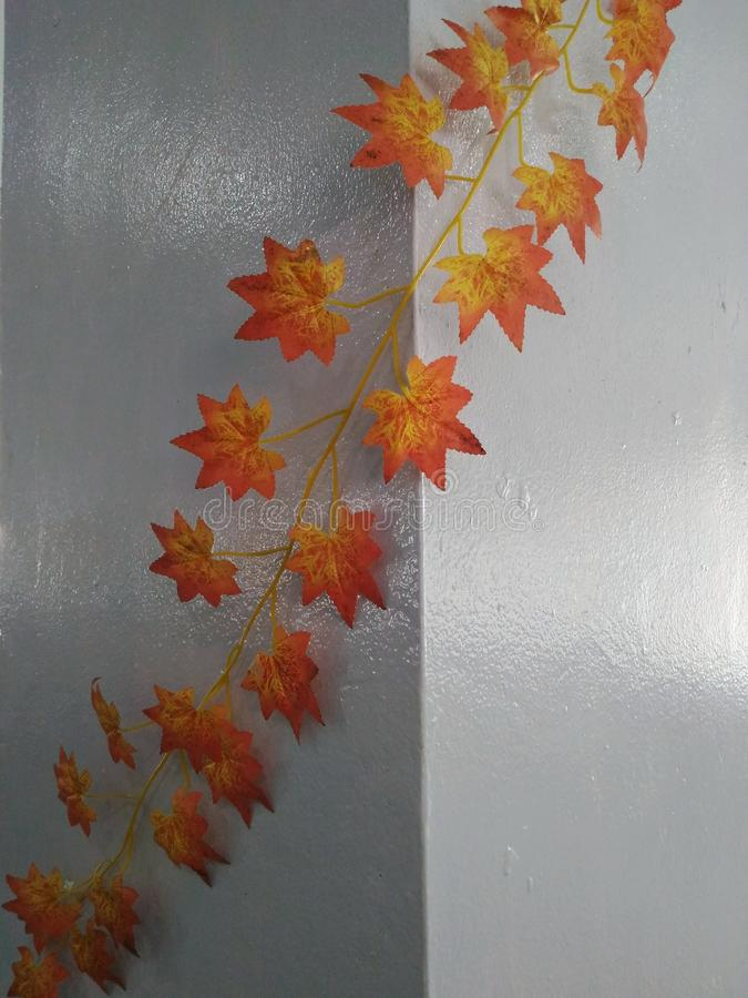 Leaves on the wall. Beautiful leaves on the wall royalty free stock photography