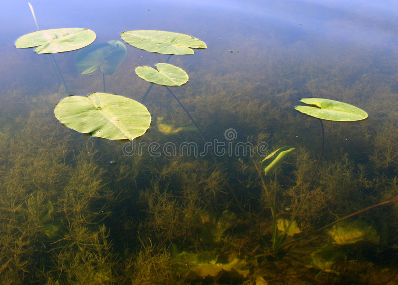 Download Leaves on the water stock photo. Image of leaves, reflection - 12206