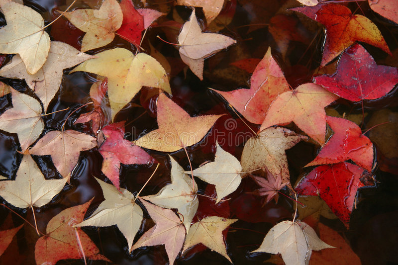 Leaves in water. royalty free stock image