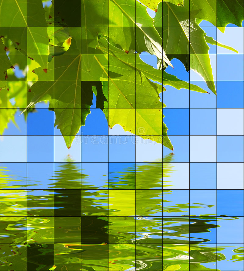 Leaves water royalty free illustration