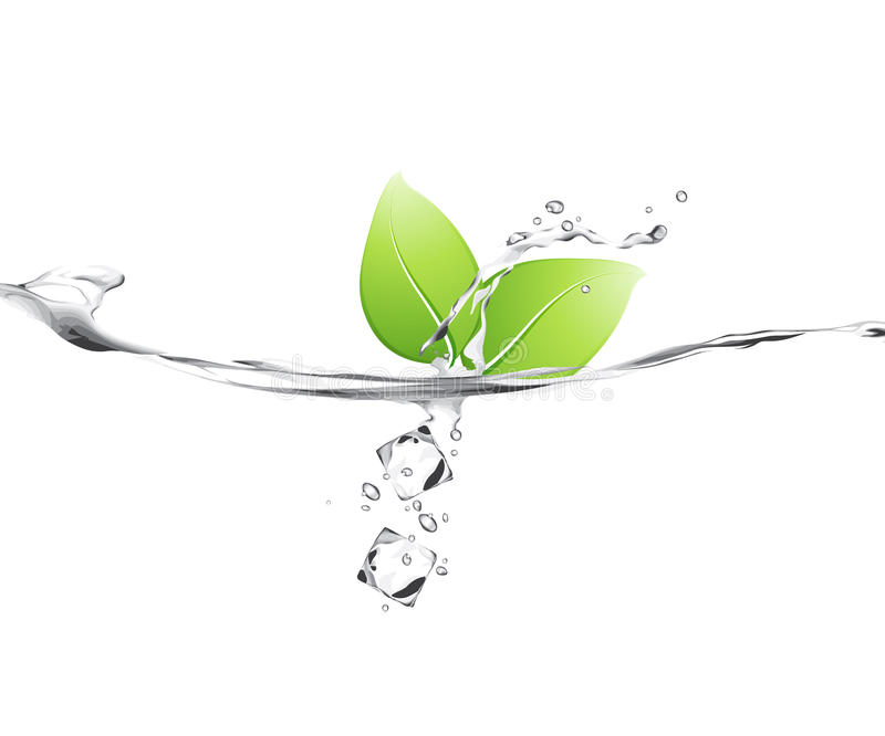 Download Leaves in water stock vector. Illustration of background - 9863889