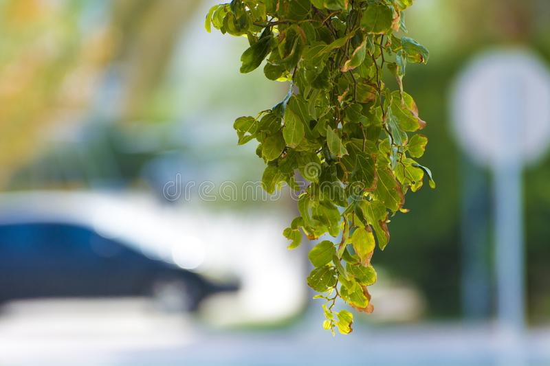 Leaves in way to die stock photography