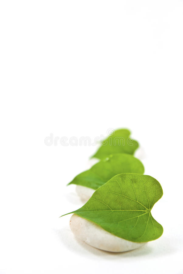 Leaves on white stones. A leaves on white stones stock images
