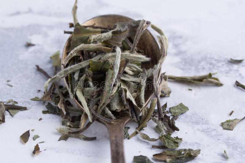 Leaves of white tea in a spoon on a white background. Tea in an antique spoon. A scattering of green tea stock photos