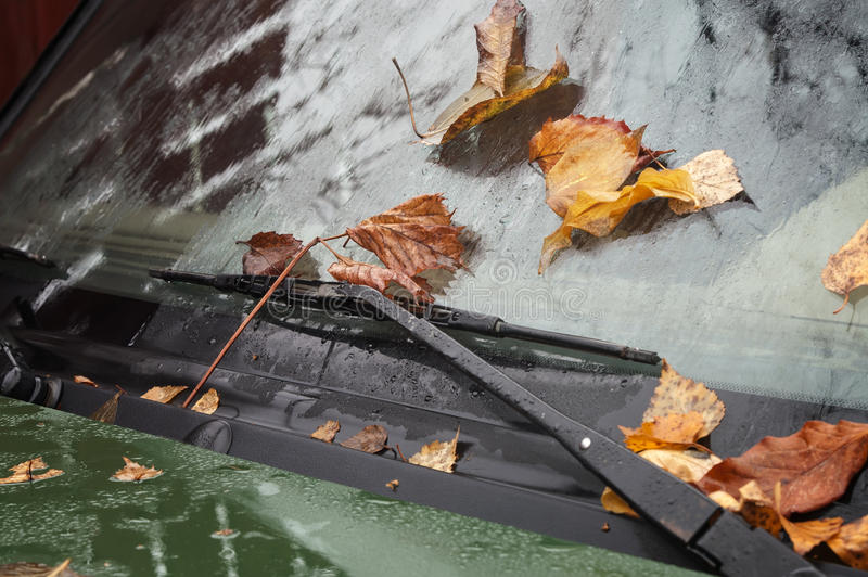 The Leaves on a Windshield. Faded leaves on the car windshield, driving in a nasty weather concept stock photography