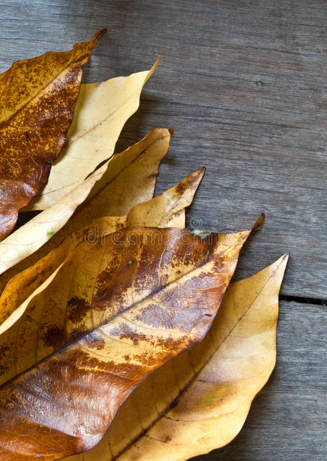 Leaves on wood background. Autumn leaves on grunge wooden background stock image