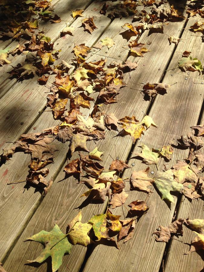 Leaves on deck royalty free stock image