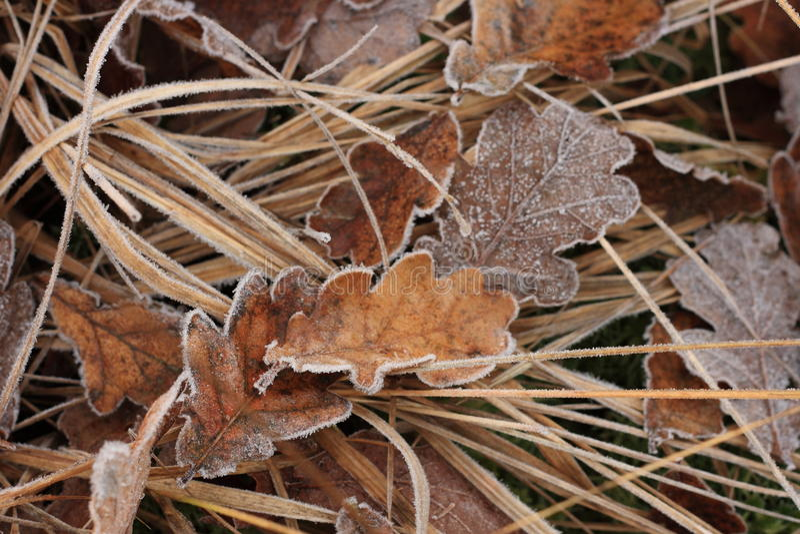 Leaves2 escarchado imagenes de archivo