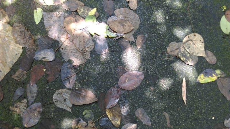 leavesautumn image libre de droits