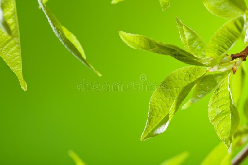leavesfjäder arkivfoto
