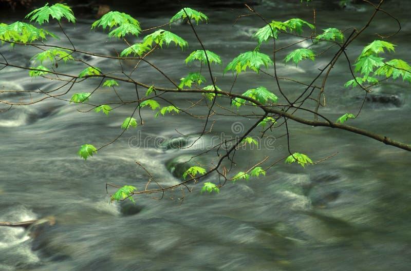 Leavesfjäder
