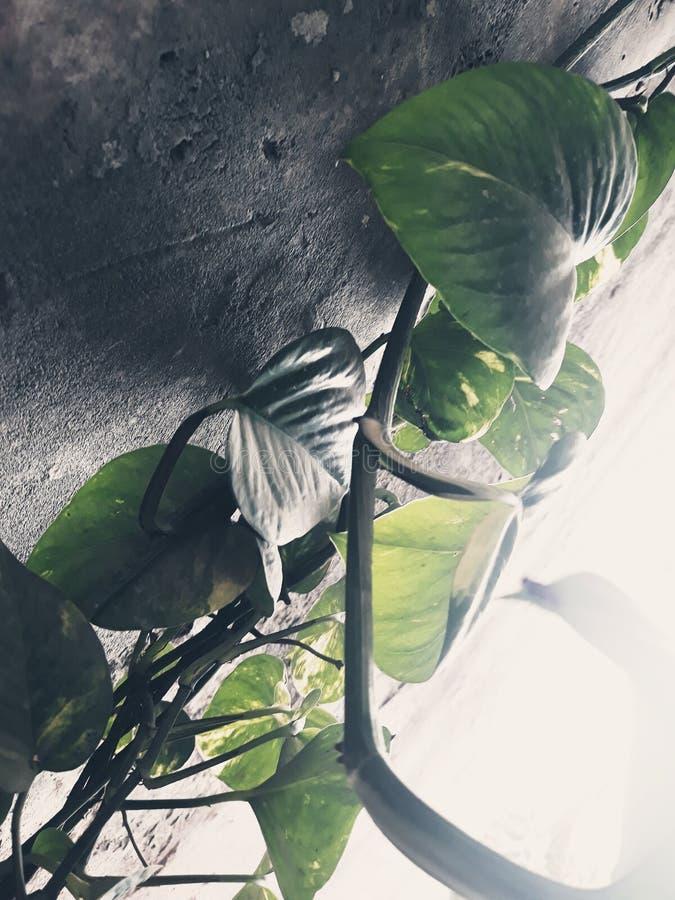 leavess стоковые изображения rf