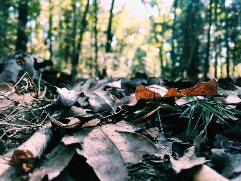 leavess стоковое фото rf