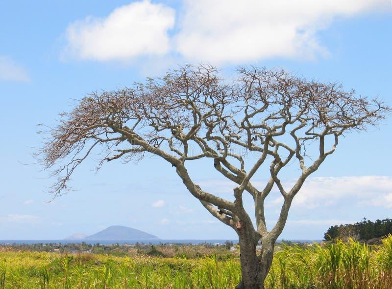 Download Leavesskjul fotografering för bildbyråer. Bild av fält, struktur - 28447