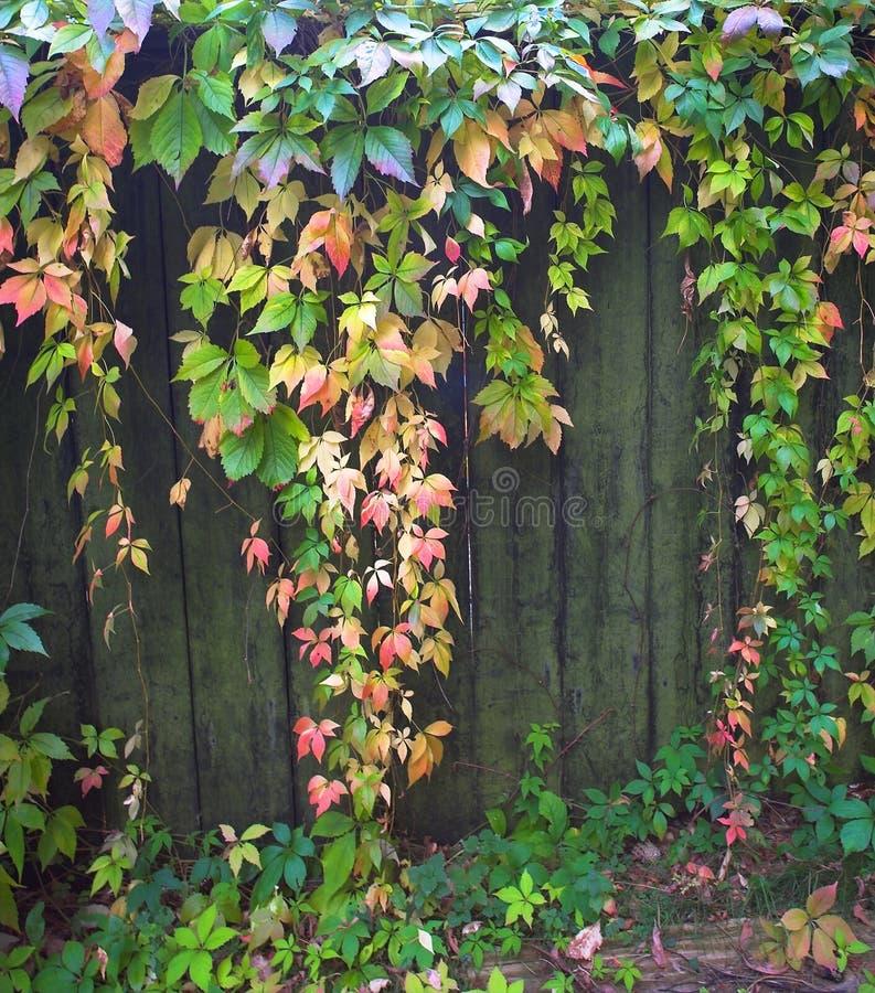 leavesvägg arkivfoto