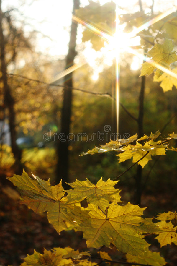 leavesyellow arkivfoto