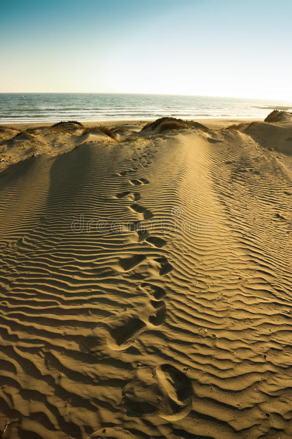 Leaving from the beach. Footprints going away from the short on fine sand royalty free stock images