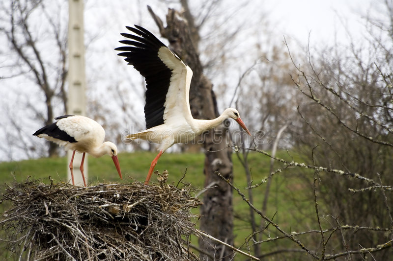 Download Leaving the nest stock photo. Image of landscape, spread - 2313366
