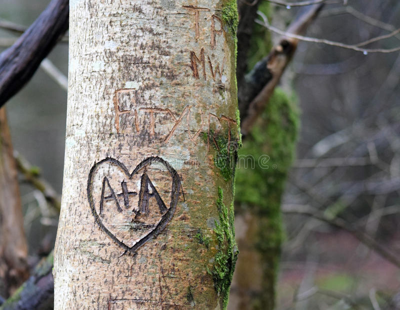 Leaving their mark. Tree in the Grizedale Forest, England stock image
